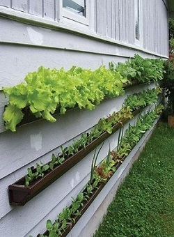roeshel planted 12 different herbs in her beautiful pallet herb garden first photo and suzanne planted lettuce radish - Small Vegetable Garden Ideas